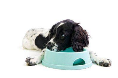 Σπιτικές λιχουδιές για το σκύλο σας