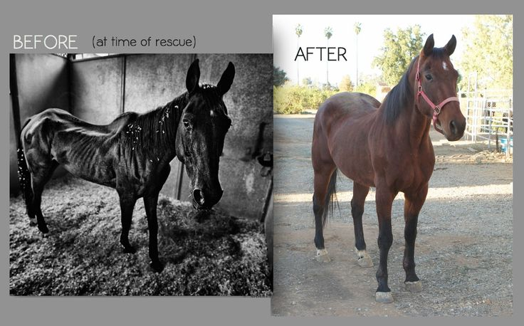 horse rescue before and after | before-after-horse-01