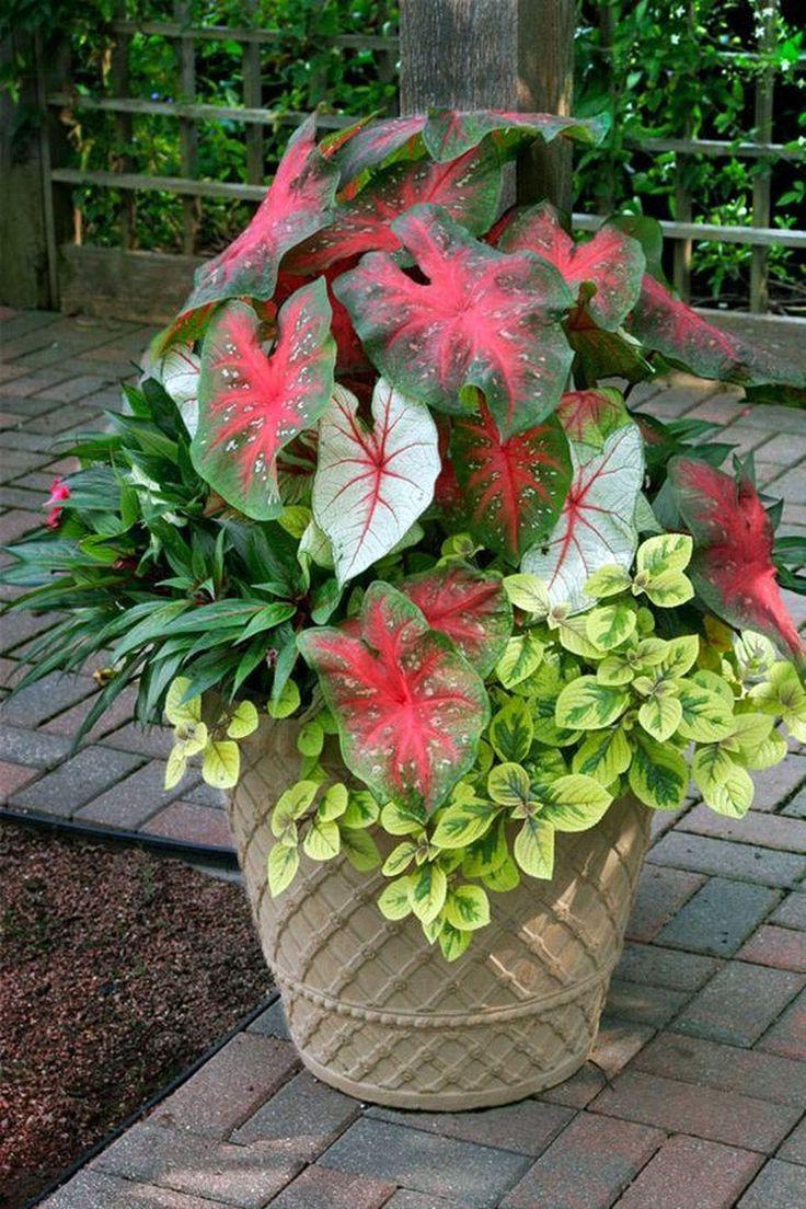 Stylish front garden ideas uk exclusive on kennys landscaping ideas