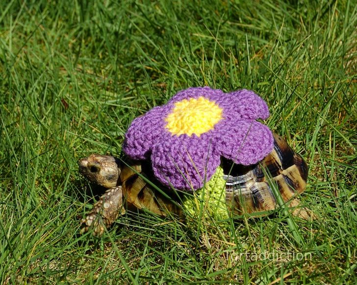 turtle, tortoise, turtle cozies, tortoise cozies, turtle sweater, tortoise sweater, knitting, pets, reptiles, clothes for pets, costumes for pets, handicraft, crocheting, art