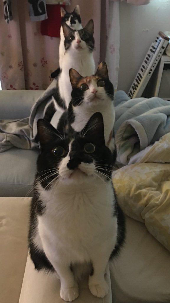 元気になれる猫の行動