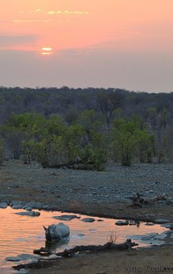 Rhino sunset - Halali waterhole, Etosha National Park - Anja Decker