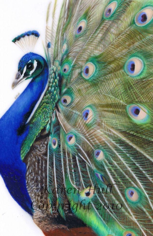39 best Art & Paintings - Peacock images on Pinterest ...