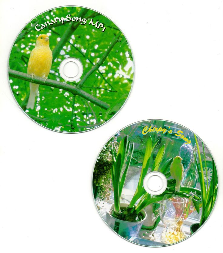 """Canary Bird Songs on CD """"Chirpy 2014"""" audio version / mixed canaries mp3 version #GraphicsbyJeffChris"""