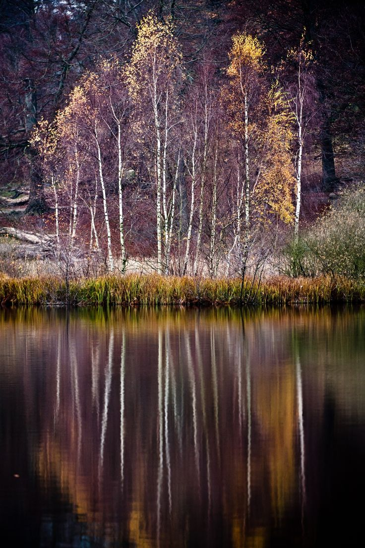 Lake in the woods -