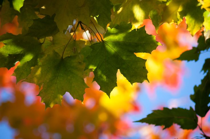 A simple shot from underneath a maple tree. If there is one thing I like about autumn in Finland, it's colors like these - This photo is published under Creative Commons Attribution-NonCommercial 3.0 license.