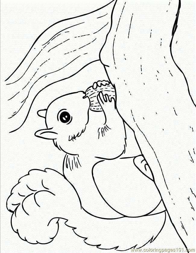 free printable coloring image Squirrel With Walnut 650x841