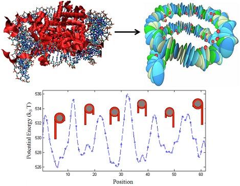How Proteins Read Meta DNA Code: Rigid-body molecular dynamics of DNA inside a nucleosome - Fathizadeh, A. et al. (2013) European Physical Journal E. 36:21