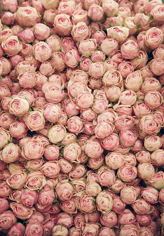 Flower Market 1 Photographic Print Pink Floral: