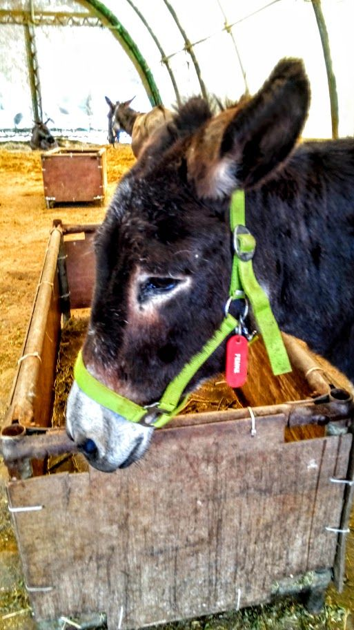 Femke from Corfu Donkey Rescue
