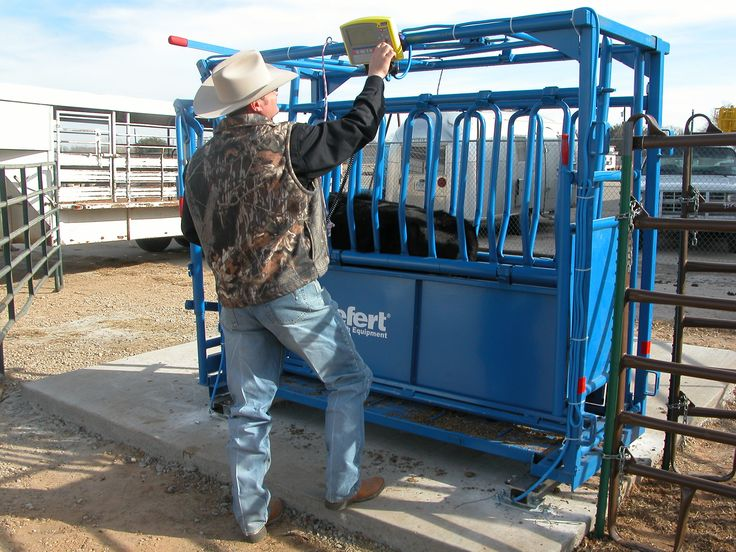Tru-Test provides the equipment you need to take the guess work out of weighing your herd, making these powerful performance measuring tools.