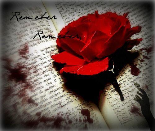 rosa de V