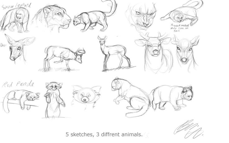 Sketch Dump 5 Diffrent Animal Sketches A Day! by Foxbat-Sullavin on DeviantArt