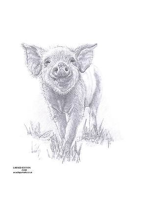 PIGLET Pig art pencil drawing Limited Edition picture print by UK artist