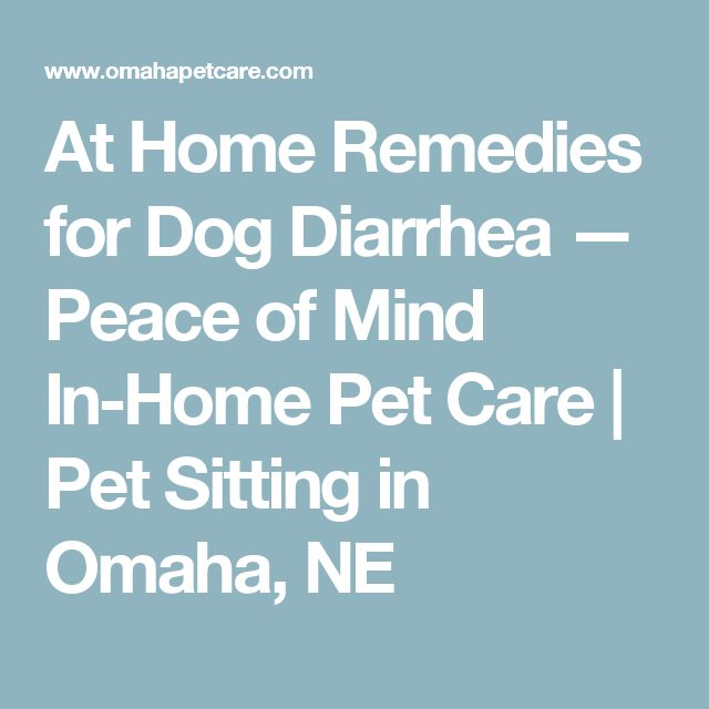 At Home Remedies for Dog Diarrhea — Peace of Mind In-Home Pet Care | Pet Sitting in Omaha, NE