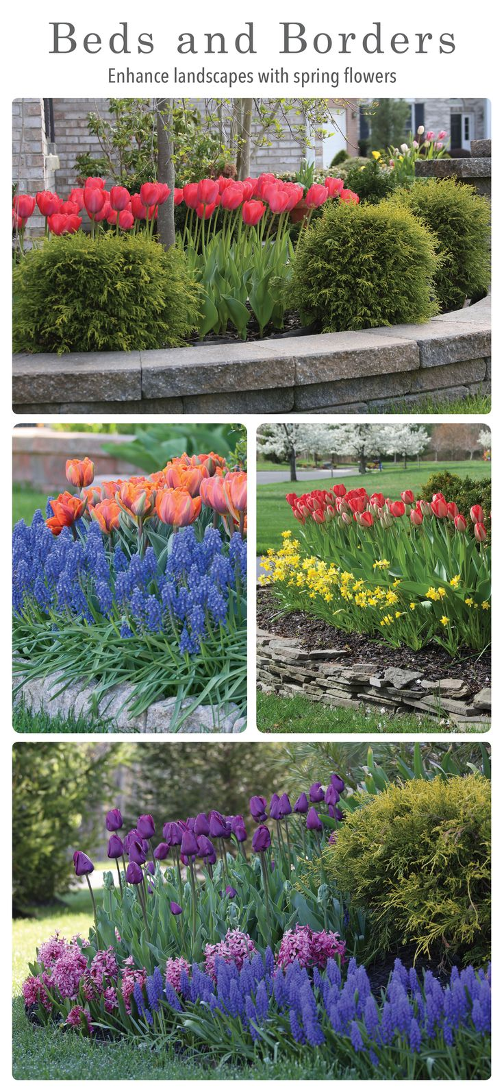 Layer fall-planted bulbs with each other  to or plant between evergreen shrubs. Enjoy a colorful spring garden before many other perennials and trees start to bloom. Download this free e-book for more ideas and inspiration.