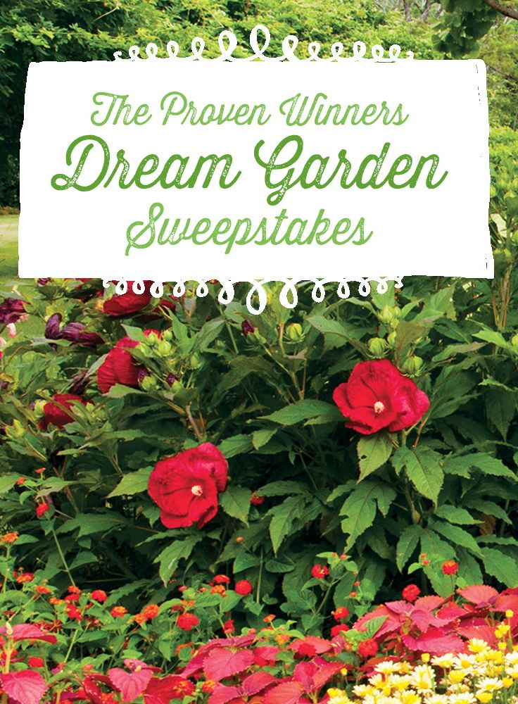 Pin sweet dreams of your very own dream garden for a chance to win your favorite plants!