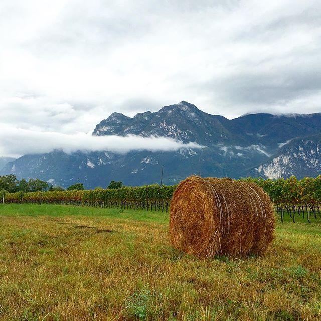 A single bail of hay on a vineyard #atlakegarda in #Italy There's beauty everywhere! @gardatrentino #gardatrentino #travel