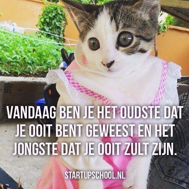 Dit is het. ✔ Volg ons voor dagelijkse motivatie, inspiratie & informerende topics, om de beste versie van jezelf te worden. ➡ @StartupSchool.nl  #succes #succesvol #Motivatie #Inspiratie #instaquote #quotes #dutch #dutchie #dutchies #fitanddutch #dutchfitness #fitdutchies #gezond #gezondheid #fit #poes #startup #fitdutchies #love #carriere #ondernemen #werken #relaties #familie #liefde #verliefd #dutchblogger #bloggers #website #fit #coaching #mindfulness