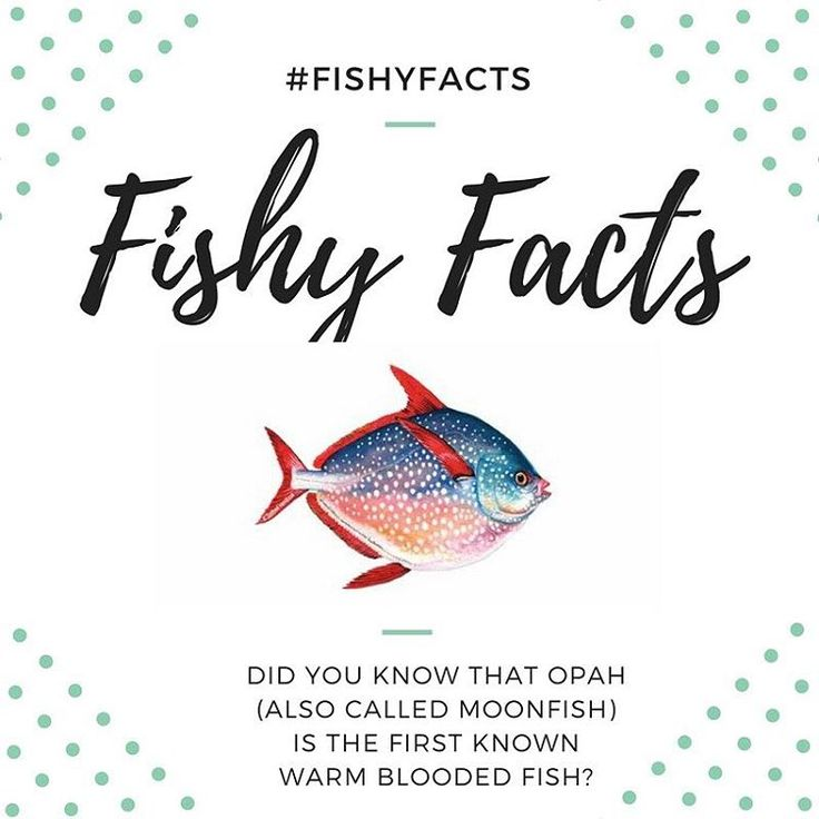 Did you know that the opah (also called moonfish) is the first known warm blooded fish? #fishyfacts #opah⠀  ⠀  Opah Illustration credit: SeafoodSource