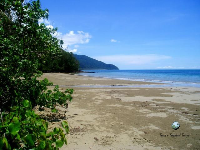 How's this for a little bit of Paradise in the #tropics. A superb day in the Daintree Rainforest today. The weather and beach was spectacular. #wishyouwerehere #tropicalparadise #CapeTribulation #greatbarrierreef #myparadise Allow us to show you around www.tropicaltours.com.au