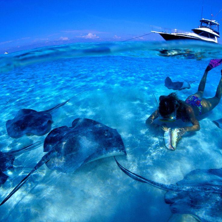 Snorkeling in Fort Lauderdale   Snorkel Tour -Yolo Boat Rentals