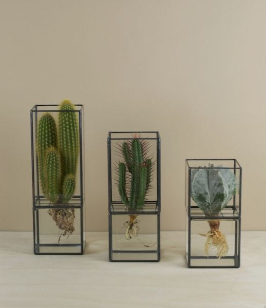 Terra hydroponic cases ... Japanese display vases designed and hand fabricated by Daisuke Tsumanuma and Kenichi Yamada of glass, copper, lead came, and solder. Reminiscent of museum or specimen cases these are designed after the nineteenth century terrariums from which they draw their name, and like those are made for collecting and showcasing plants - desert and tropical exotica and most especially succulents and cacti.