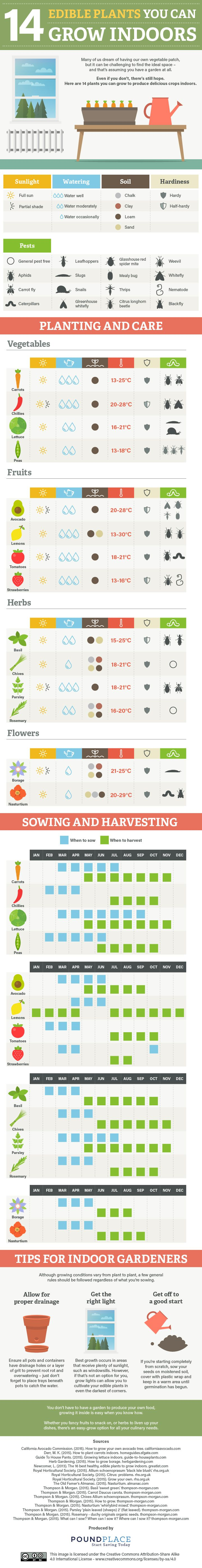 14 Edible Plants You Can Grow Indoors #Infographic