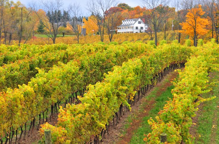 Savour the beauty of Niagara's wine country in the fall