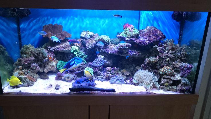 110 Best Prime Aquariums Your Custom Fish Tank
