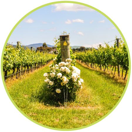 Choose the reliable Vineyard Management Software in New Zealand for increase the productivity of your vineyard business. For more information, Conatct vinea.
