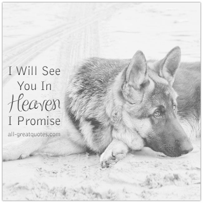 I Will See You In Heaven I Promise. | all-greatquotes.com #Grief #Loss #Dog