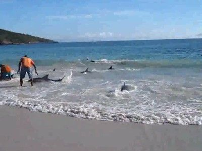 30 Dolphins Stranded on the Beach Saved by Humans (Video)Saving Dolphins, Dolphins Wash, Favorite Places, Dolphins Strand, 30 Dolphins, Some Thirty Dolphins, Human Videos, Nature Beautiful, Beach Saving