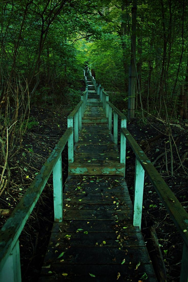 Forest Staircase in Crothers Woods, Toronto.