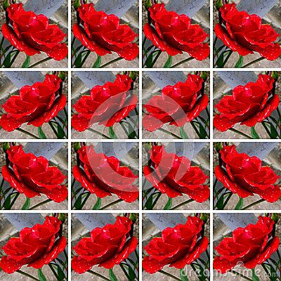 #Red #roses with #rain #drops, inside square shapes arranged as #background
