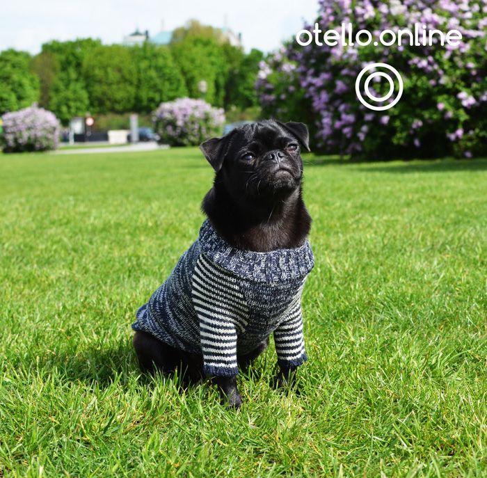 48 besten Design Bilder auf Pinterest | Hunde, Pullover und ...