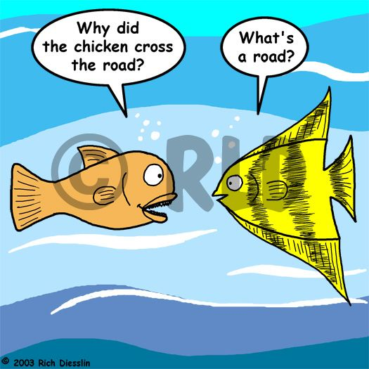 Fish why did the chicken cross the road joke | Fish Humor ...