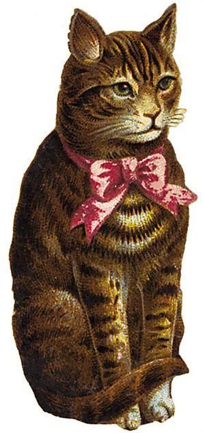 Cute free vintage cat image