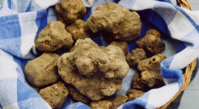 The Marzuolo #Truffle. #Food Festivals in March.