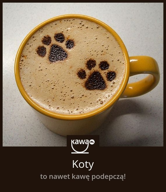 Koty to nawet kawę podepczą!