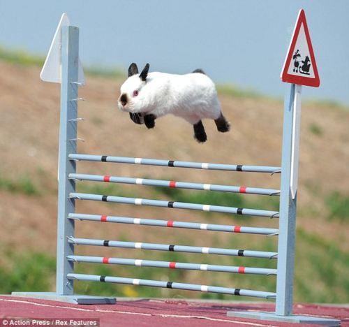Bunny Hop - LOL.