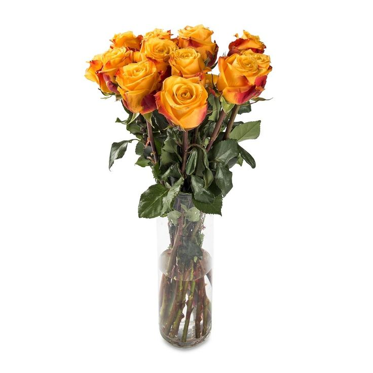 Speciality Bright Roses
