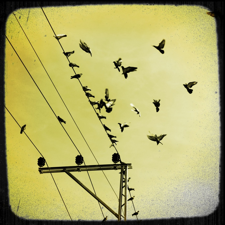 dots of birds