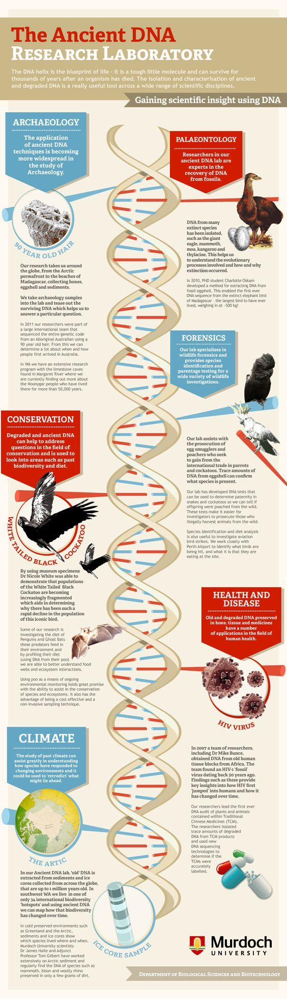 Así se busca el ADN antiguo
