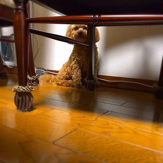 カミナリ怖くて出てきてくれない( ˃̣̣̥᷄ω˂̣̣̥᷅ )⚡️ #犬#ミックス犬#ミックス犬部#ワンコ#マルプー#犬バカ部#可愛い#愛犬#いぬ#ペット#ふわもこ部#ふわふわ部#トイプードル#マルチーズ#まるぷー#マルプー連合#petstagram#pets#dog#pet#instadog#cutedogs#maltipoo#maltipoopuppy#maltipoosofinstagram#mixdog#遠くから眺める#餌で釣ってみる#動かない。゚(゚´ω`゚)゚。