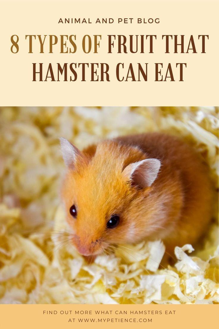 863e7fd653a19786a49581435c308ef7 - How To Get Food Out Of Hamster S Cheeks