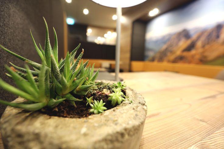 Greenery - Pflegeleichte Pflanzen im DIY Betontopf im Büro verbessern das Klima und die Laune.