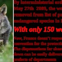 Martin Schulz (The President of the European Parliament): France doesn't respect Berne convention for the protection of wolves | Click for details and please SIGN and share petition. Thanks.