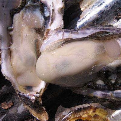 DEC-MAR浦村かきプランクトンが豊富な鳥羽の海で育つかきはで、一年かからず食べごろに成長します。ぷっくりとしたミルキーな白い身には海のエキスがたっぷり。