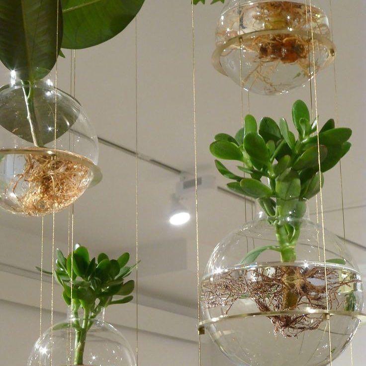 Indoor garden hanging #casa #home #me #natura #natural #ambiente #naturelovers #instagramers #instagood #instadaily #instalike #instanature #instaflower #inataflowers #flowers #flower #likes #followme #photooftheday #love #green #garden #giardino #casa #home #hotel #ristorante #restaurant #archilovers #yacht @elledecor @elle_italia @homify @home_it @homeadore @gioiamagazine @grazia_it @interiordesign_architecture @internimagazine @livingcorriere @casafacile @abitarecasa @casavogue…